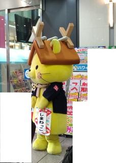 20171219_shimanekko.jpg